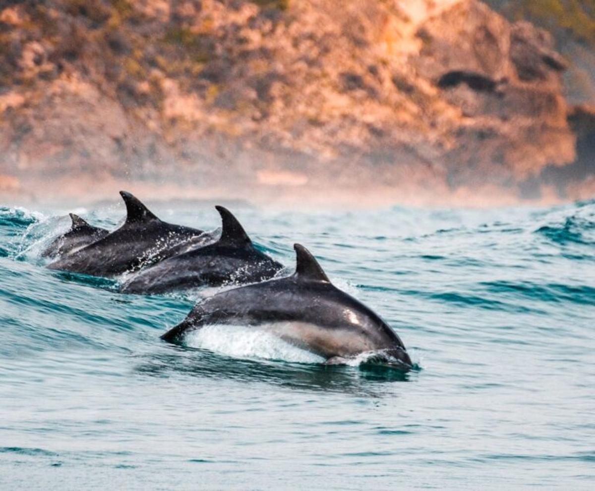 Los delfines trabajan en equipo
