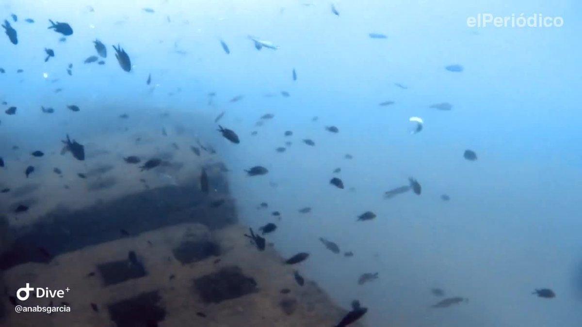 Inmersión en el arrecife artificial frente el espigón de la Mar Bella.