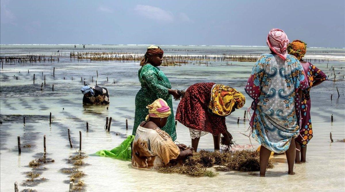 Mujeres en un cultivo de algas en Tanzania.