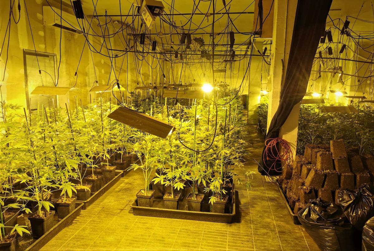 Plantación ilegal de marihuana desmantelada en L'Hospitalet de Llobregat.