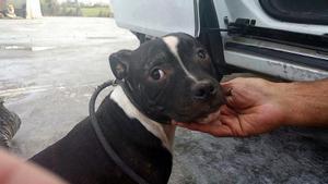 Uno de los perros, cuando fue rescatado por la policía.