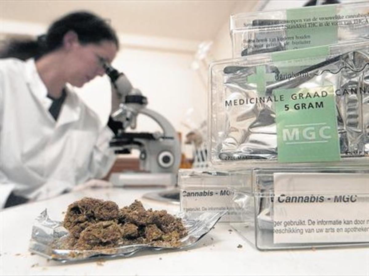 Una investigadora inspecciona muestras de cannabis en un laboratorio de la ciudad holandesa de Rotterdam.