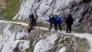 Un vídeo muestra a unos senderistas despeñando a un jabalí por un barranco de Asturias