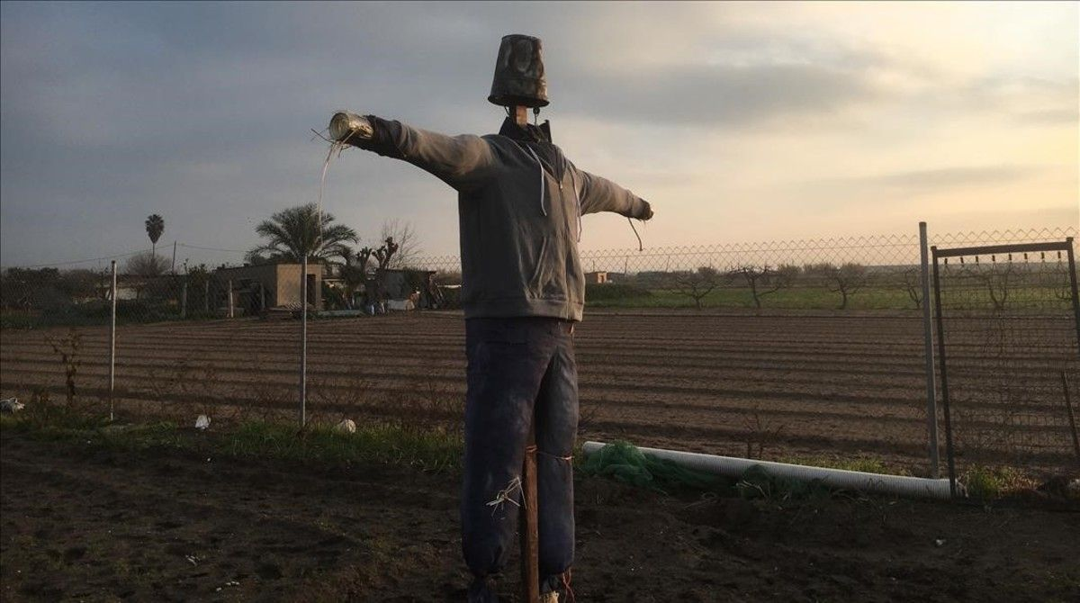 Escenarios de 'SQE': el huerto de Elías, en la zona agrícola de Gavà,con el espantapájaros.