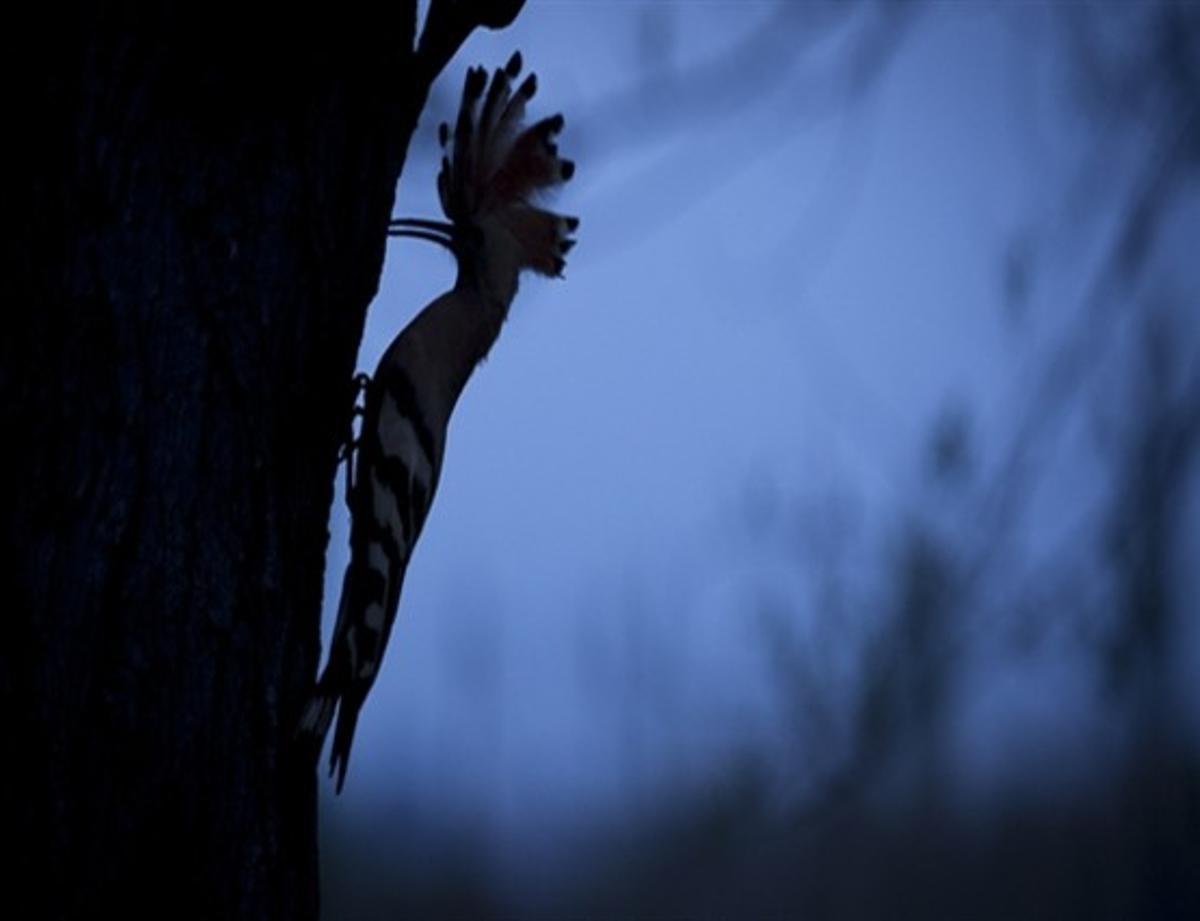 Una de las imágenes de la exposición 'Cornellà: Natura Amagada'.
