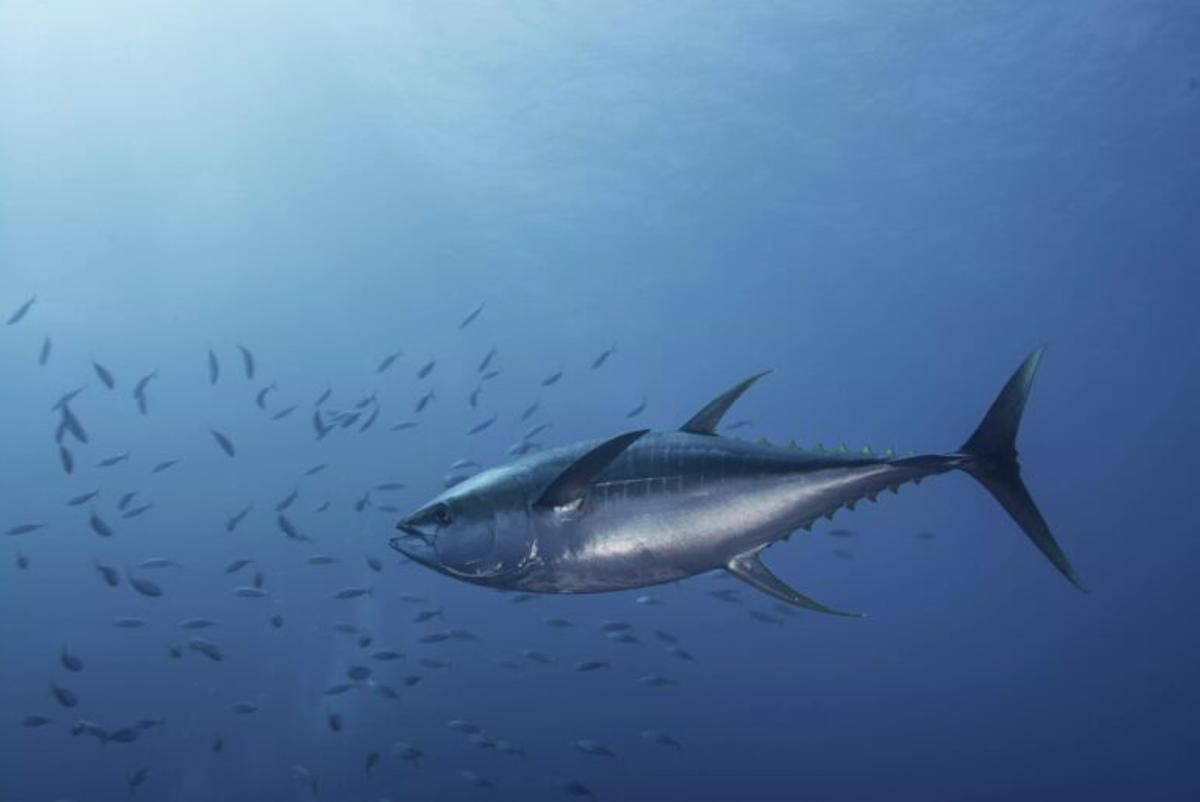 Cómo lograr que el número de peces aumente un 30% en el Mediterráneo