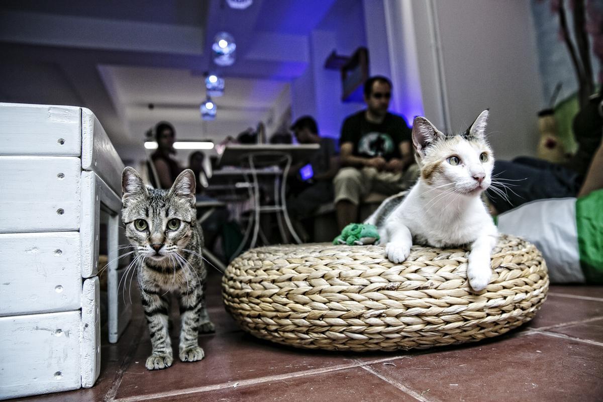 Espai de Gats es un local donde tomar algo acompañado de tu gato.