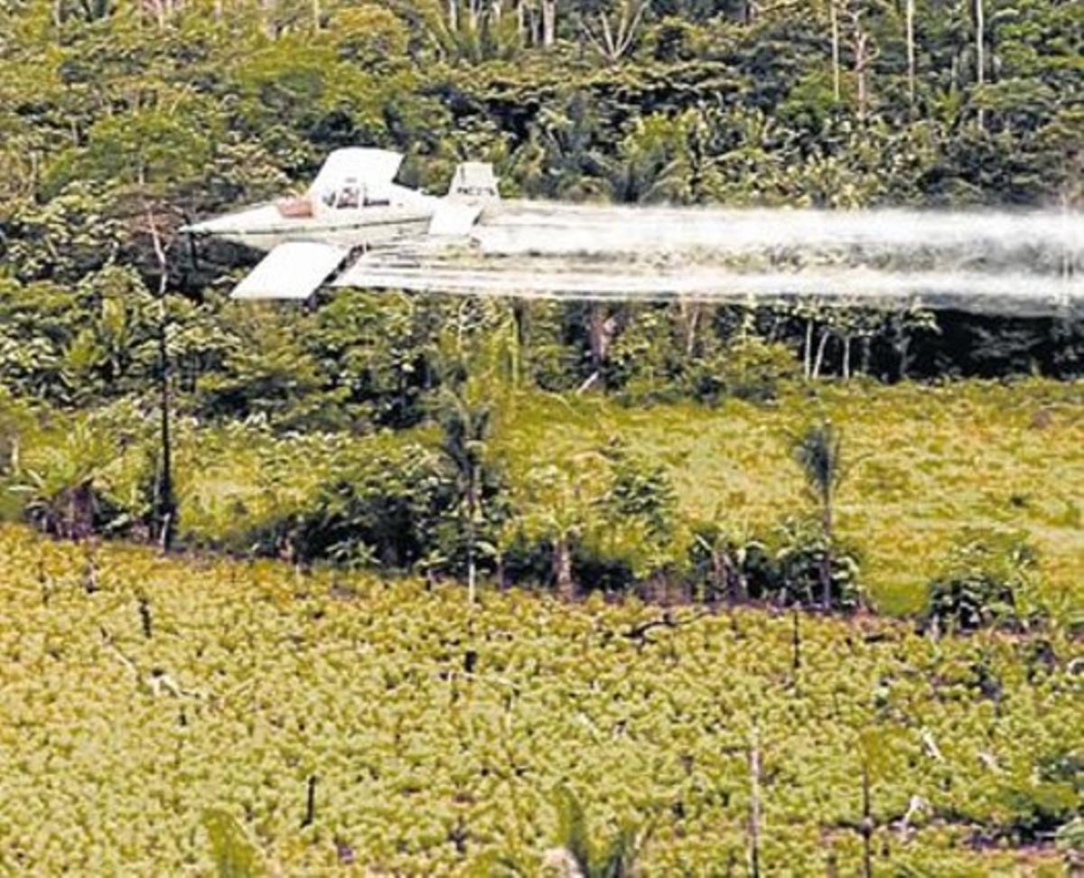 Un avión fumiga con glifosato una plantación.