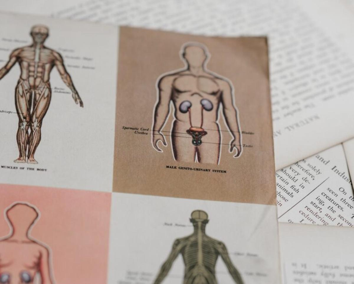 Cómo descubrir que la próstata se está haciendo grande y cómo aliviar los síntomas