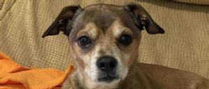 Leo, el perro de la víctima de un parricida de Oviedo, busca hogar