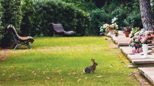 Fauna propia del cementerio de Roques Blanques.