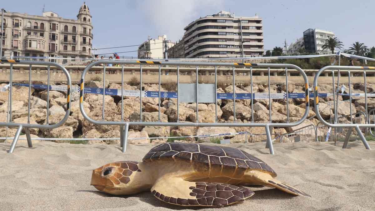 Nido de tortuga boba en la playa del Miracle de Tarragona y voluntarios vigilando el área. En la foto, una réplica de tortuga boba instalada en la zona.