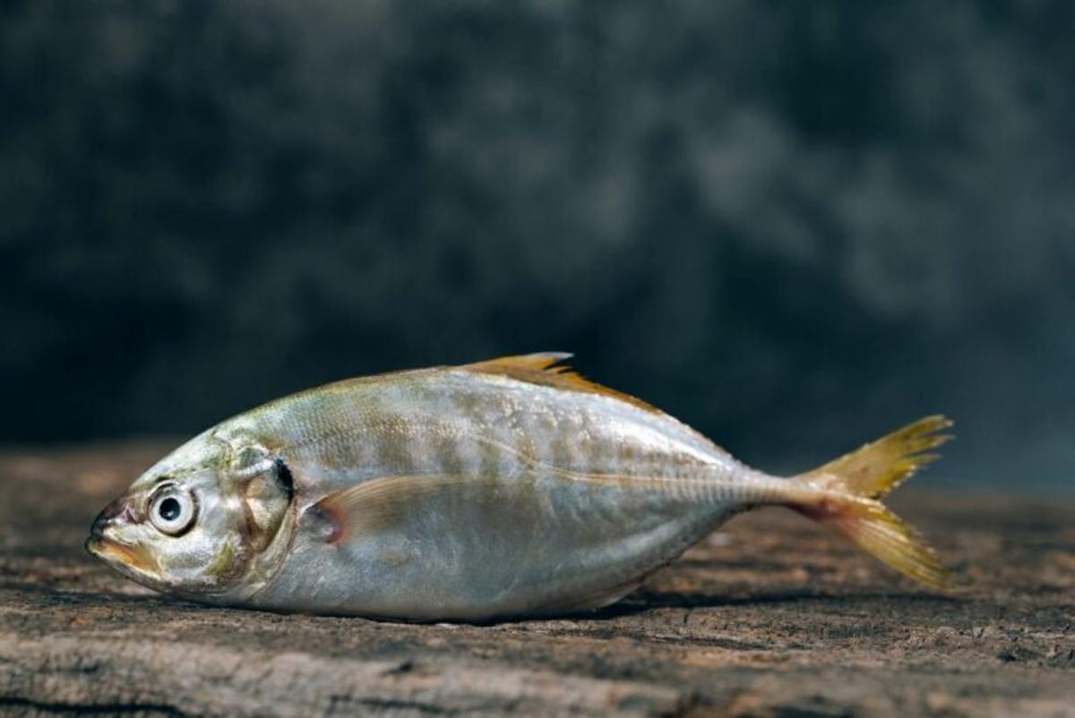 Los peces pueden sentir dolor