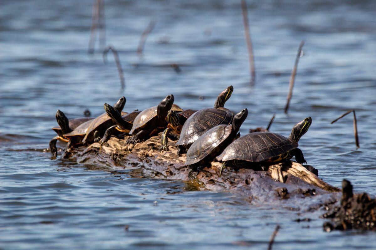 El ser humano, más letal que el cambio climático para anfibios y reptiles