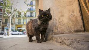 Un gato callejero, en una imagen de archivo