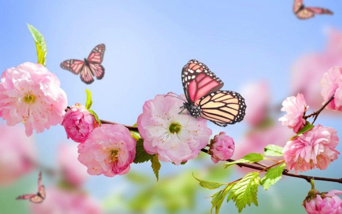 Primavera 2020: La primavera comienza este viernes a las 4.50 horas