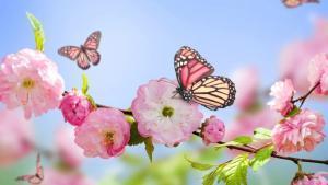 La llegada de la primavera y el florecimiento de la naturaleza.