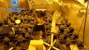 Plano general del cultivo de marihuana localitzado en uno dels narcopisos de Cornellà de Llobregat