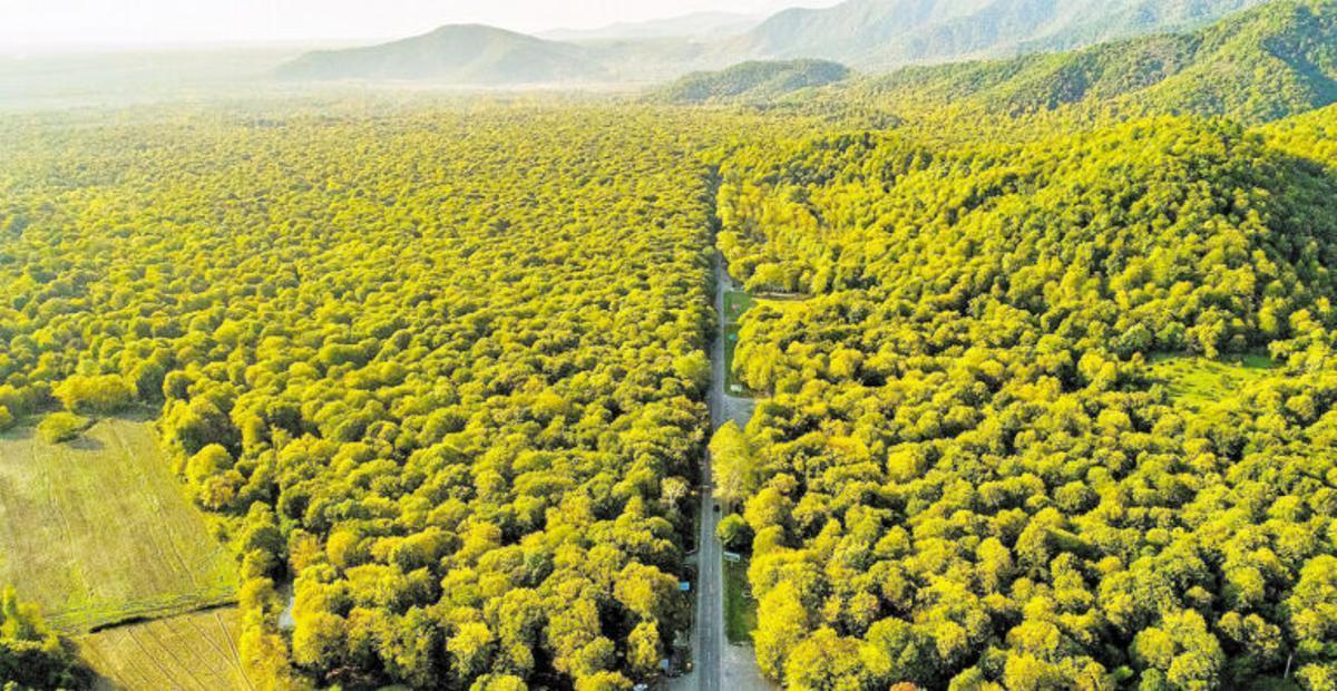 Los bosques del mundo, saturados de CO2
