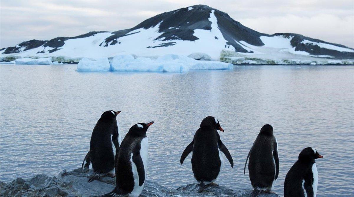 Pingüinos en la Antártida, en el 2017.