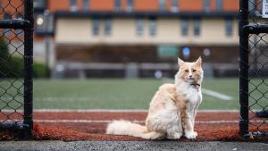 En 2018 el gato comenzó a hacerse popular debido a que muchas personas que se topaban con él.
