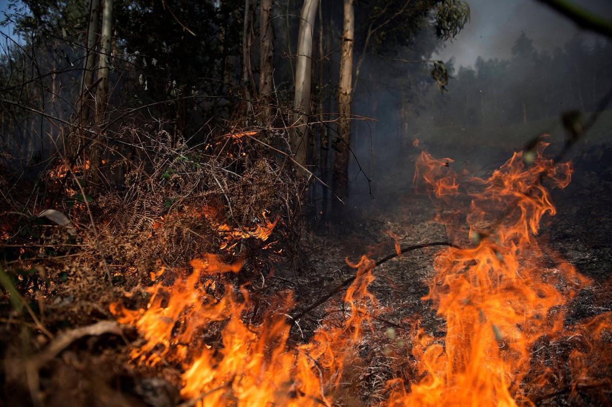 Aumenta el riesgo de incendios forestales este verano.