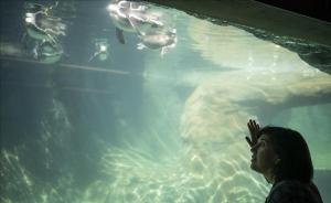 Montse Santamarina es voluntaria del Zoo de Barcelona.