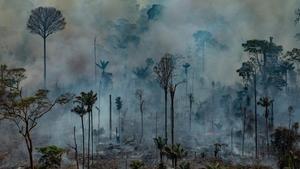Viatge al quilòmetre zero de la destrucció de l'Amazònia