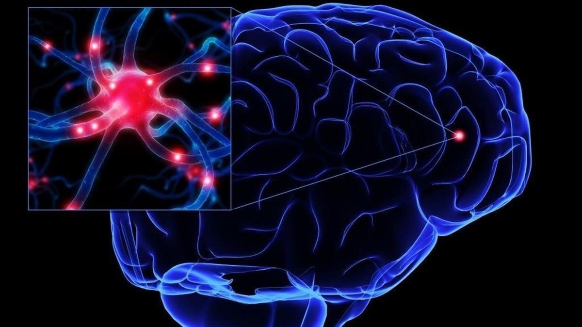 Recreación de neuronas en el cerebro.