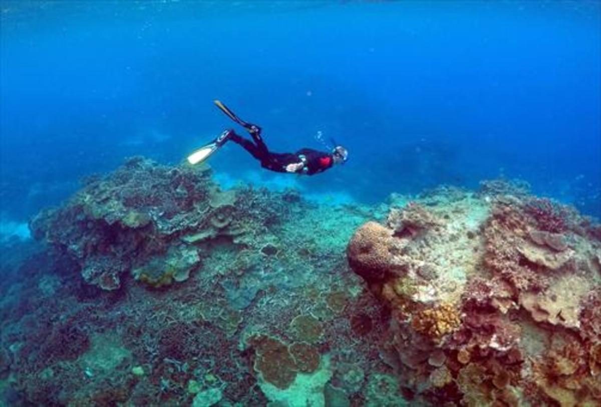 Un hombre bucea en la Gran Barrera de coral australiana.
