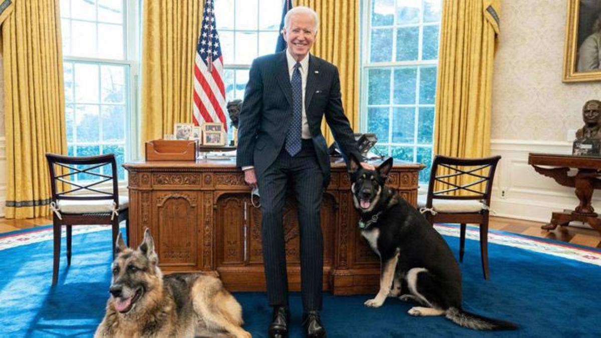 Joe Biden junto a Champ y Major, en el Despacho Oval.