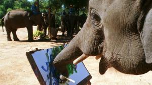 Els elefants asiàtics tenen habilitats matemàtiques pròpies de les persones