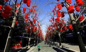 Una muchacha camina a lo largo de una calle donde los árboles están decorados con linternas rojas por motivo de las celebraciones del Año Nuevo Lunar, en el Parque Ditan de Beijing (China).
