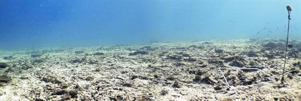 Paraje submarino cercano a la isla de Cousin, en el archipiélago de las Seychelles, antes de los trabajos de restauración.