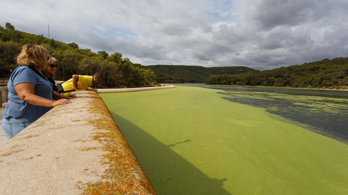 Unos senderistas observan la acumulación de algas verde chillón junto a la presa del embalse de Foix.