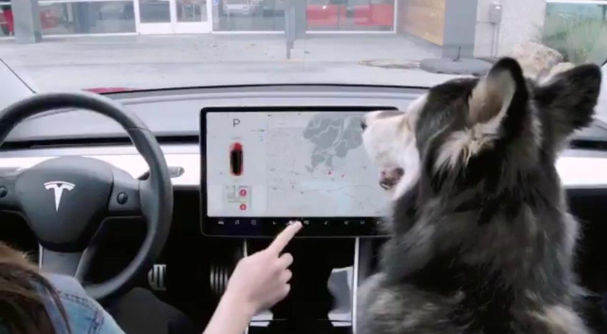 Tesla activa el 'modo perro' para que puedas dejar a tu mascota en el coche sin riesgo para su salud