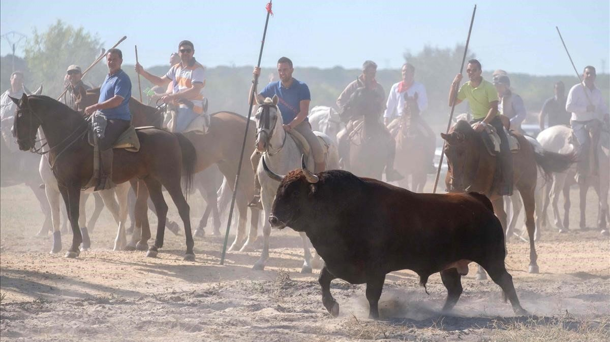 El Toro de la Vegade Tordesillas.