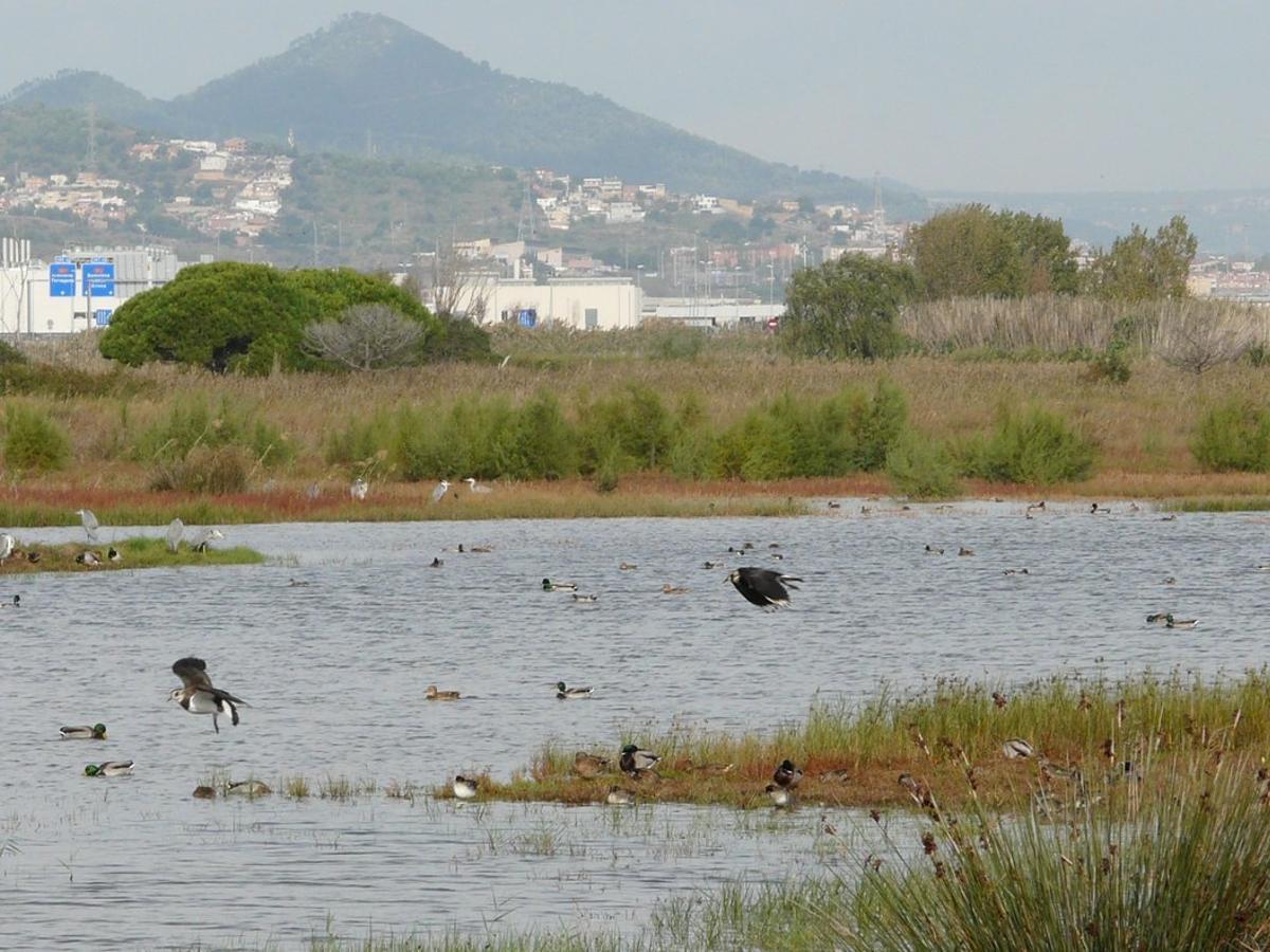 El Govern ampliarà zones protegides del delta del Llobregat després d'un avís de Brussel·les