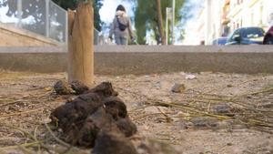 Excrementos de perro, en la calle del Cardenal Cervantes de Tarragona.