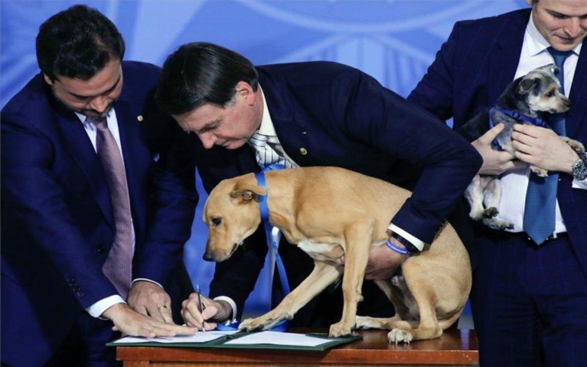 Jair Bolsonaro firma ley para protección de perros y gatos en Brasil.