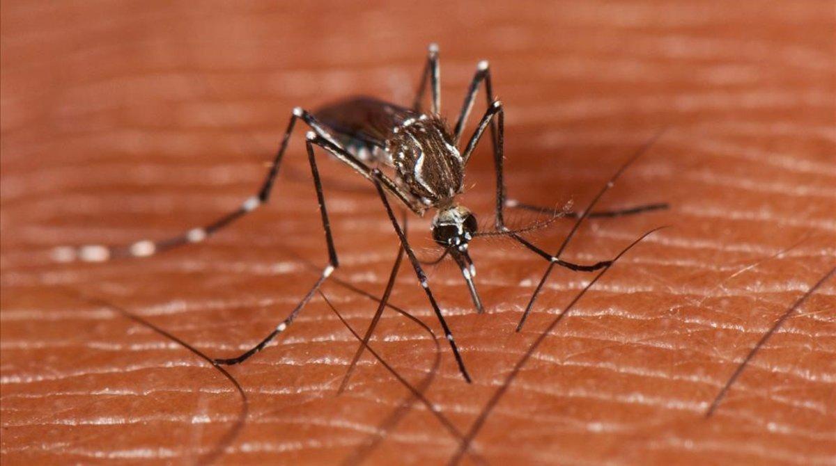 Un mosquito.