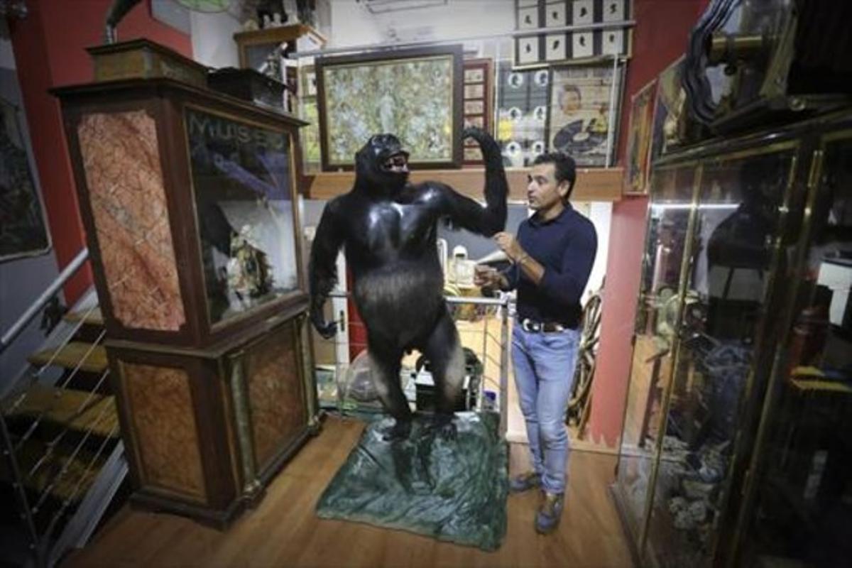 El anticuario Víctor Gómez, junto a uno de gorilas que encandilaron al público en el Taxidermista, en una de sus tintinescas tiendas.