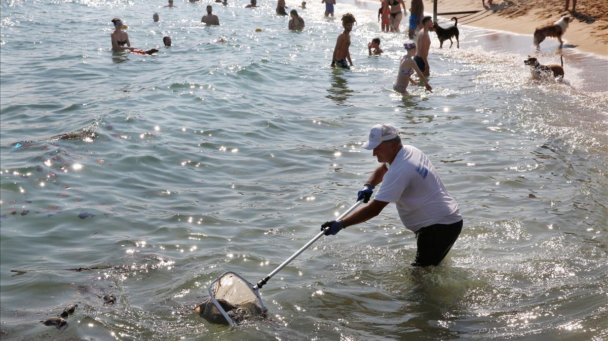 Ratas Muertas En Las Playas De Barcelona