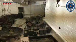 Los Mossos y la Guardia Urbana de L'Hospitalet desmantelan un cultivo de marihuana en el sótano de un local comercial.
