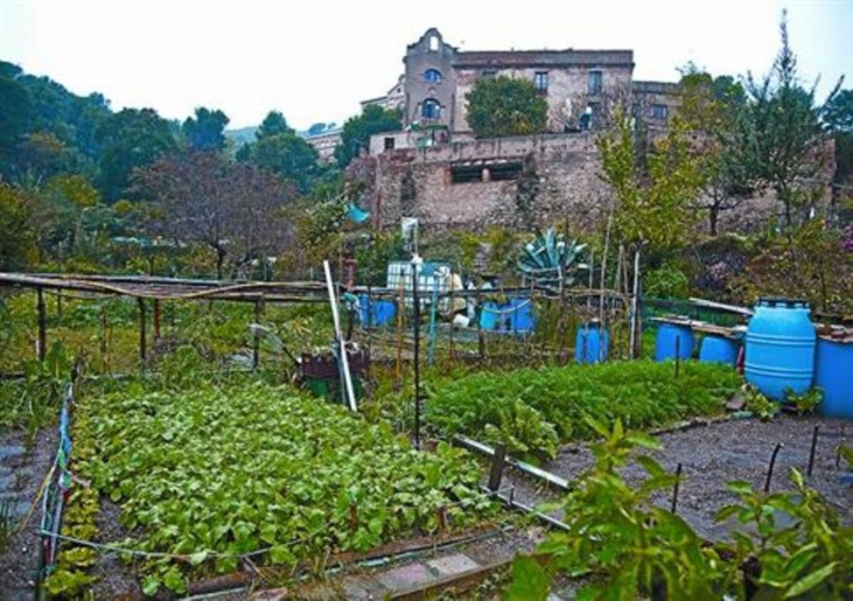 Los huertos del valle de Can Masdeu, uno de los usos del parque que los vecinos quieren potenciar.