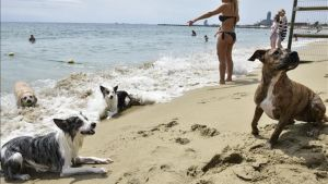 La pequeña zona de la playa de Llevant habilitada para los perros.