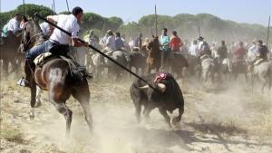 Un participante del torneo clava su lanza en Platanito, el Toro de la Vega del 2010.