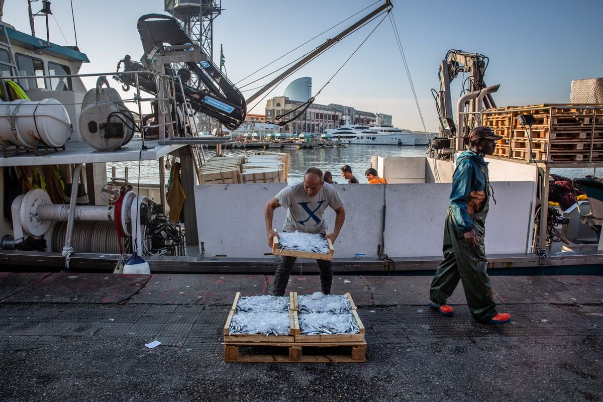 Pescadores descargando las capturas de una jornada de trabajo, en la cofradía de pescadores de Barcelona.