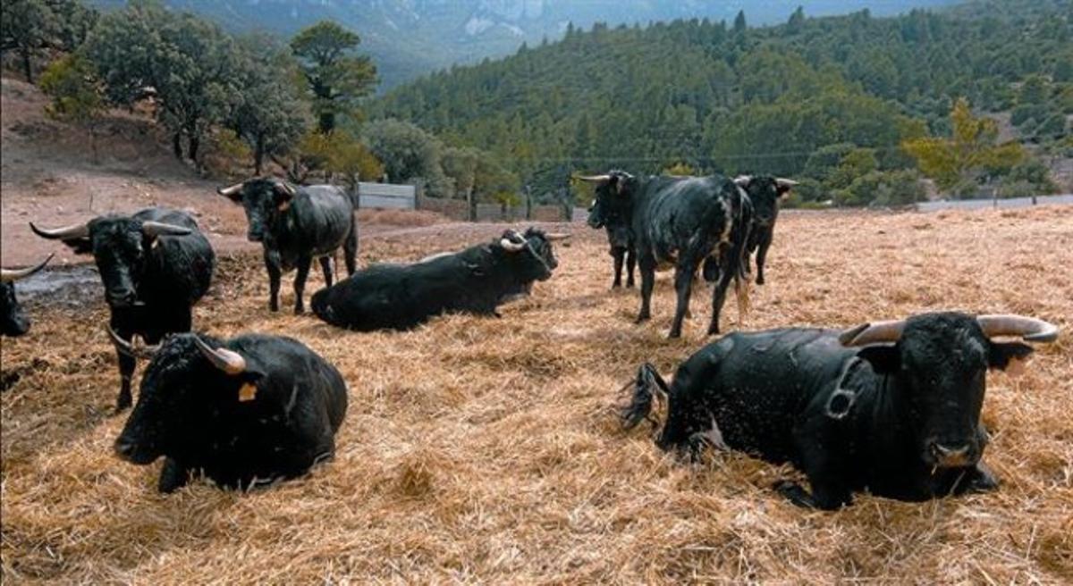Toros de la ganadería de Rogelio Martín.