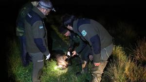 El cos d'agents rurals de Catalunya podrà portar armes